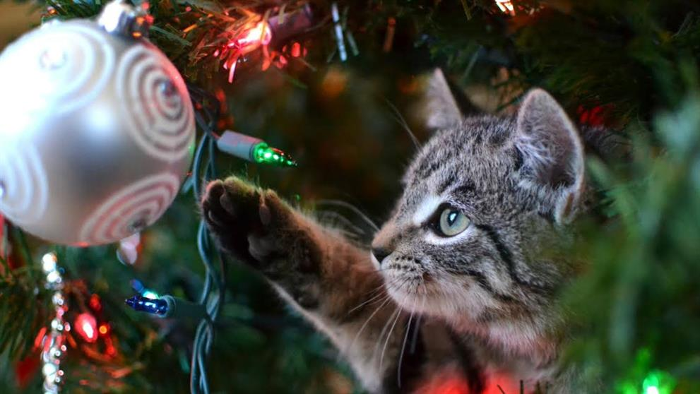 f6ba8e92ad6d Woman s Diary - Πώς να προστατεύσεις το Χριστουγεννιάτικο δέντρο από ...